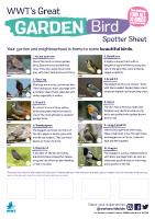 Garden-bird-watcher