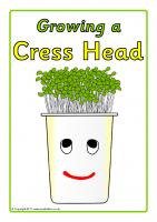Growing a Cress Head