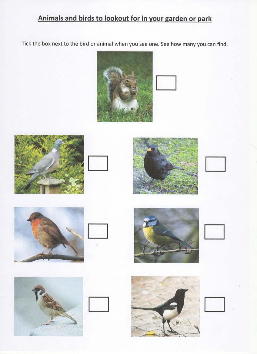 Animals & Birds In Garden & Park