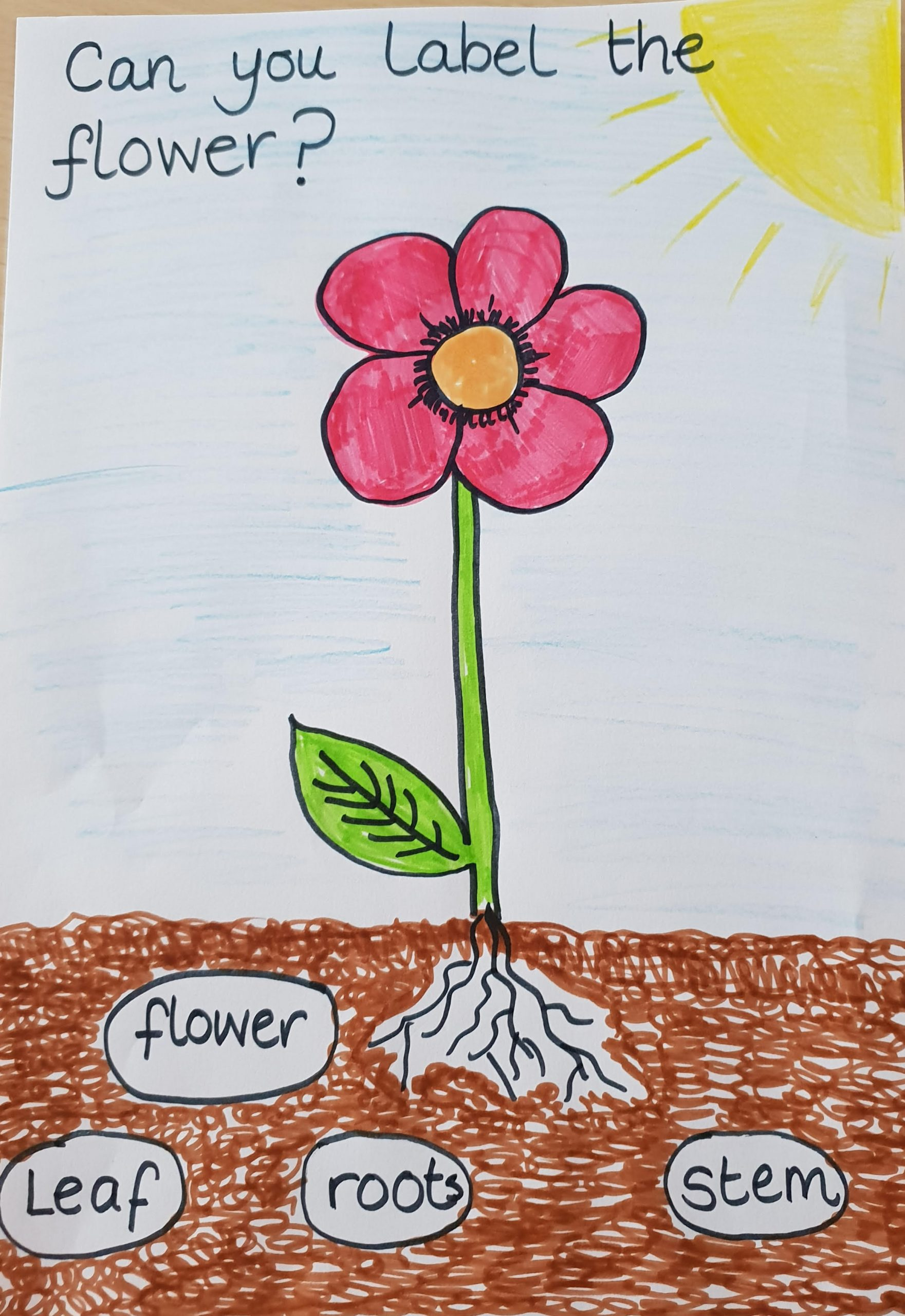 Can you label the flower