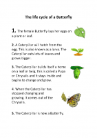 The life cycle of a Butterfly 2nd